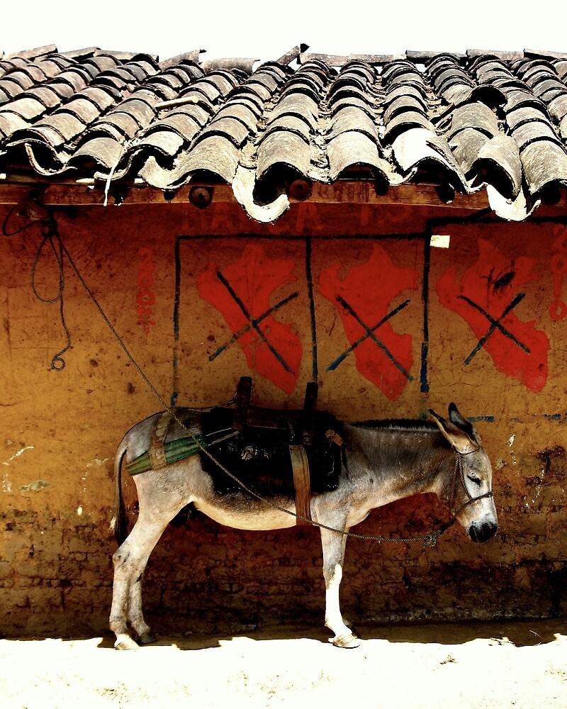 Burro - Highlands of Peru by bradackerman