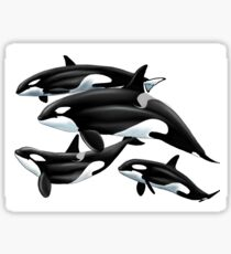 Orcas  Sticker