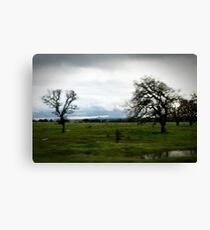 Driving Canvas Print