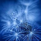 Tiny Fireworks by Sue Nueckel