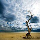 Murray River   Sth Australia by Sue Nueckel