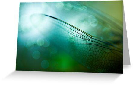 Emerald Damselfly  by Sue Nueckel