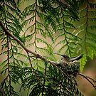 Hummingbird in a Nest by Tamara Brandy