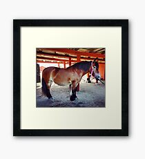 North Swedish Draft Horse Framed Print