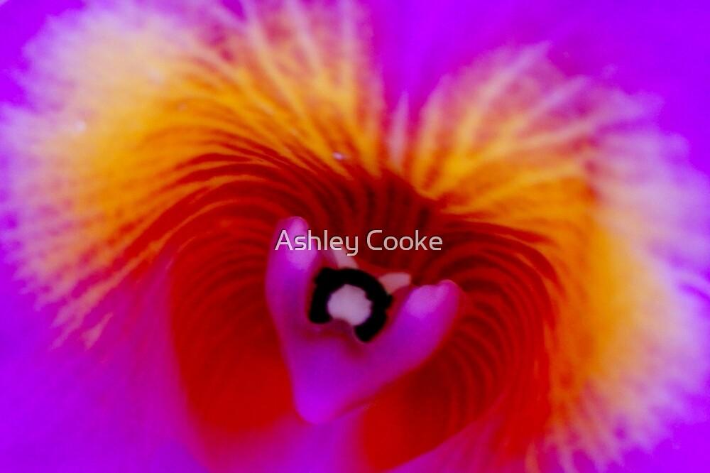 Taz - Orchid Alien Discovery by ©Ashley Edmonds Cooke