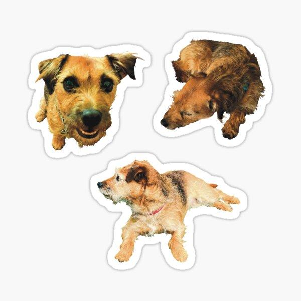 Cute, scruffy dog photo sticker selection Sticker