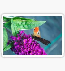 Süße Schmetterling am ende Sommer Sticker