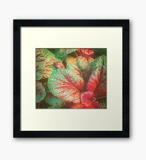 RED GREEN LEAFY PLANT INDIA Framed Print