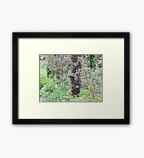 Camouflaged  Framed Print