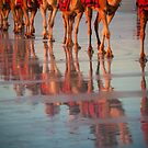 Cable Beach Camels by Natalie Ord