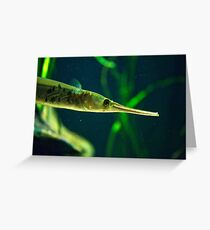 Pipefish Greeting Card