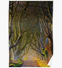 The Dark Hedges  Game of Thrones County Antrim  Northern Ireland Poster