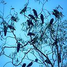 Black Birds by Werner Padarin