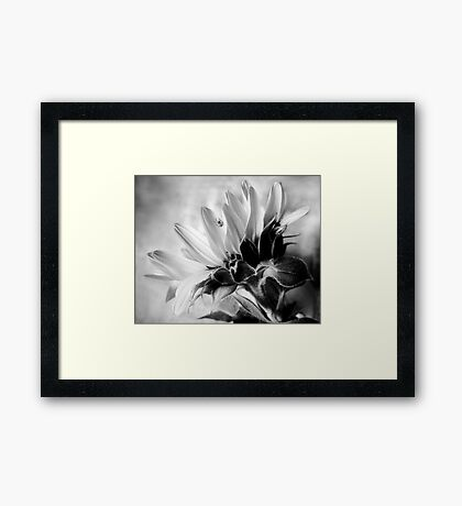 Sunflower with Spider Framed Print