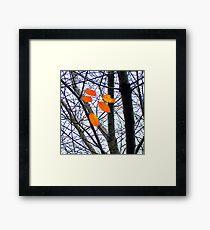Lámina enmarcada Cinco hojas de naranja