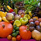 Cornucopia Best In Show by phil decocco