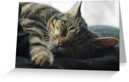 Sleeping Elsa Tabby Cat by xxBigAlxx