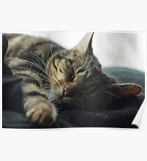 Sleeping Elsa Tabby Cat Poster