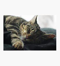 Sleeping Elsa Tabby Cat Photographic Print