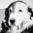 Ringo (acrylic on canvas) by LeMaxBleu