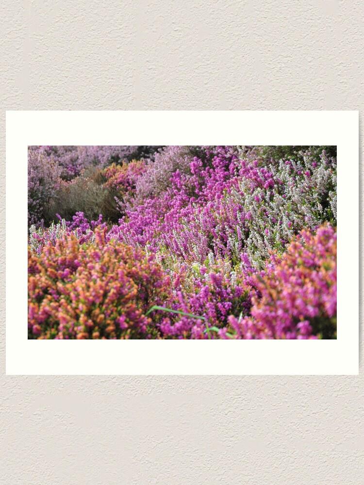 Alternate view of Lavender field Art Print