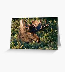 Grazing Moose Greeting Card