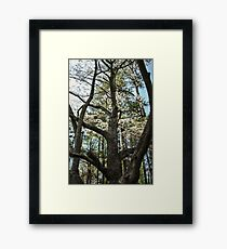 Looking Up the Trunk Framed Print