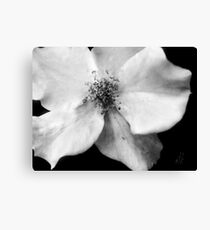 Flutterbye Rose in Black and White Canvas Print