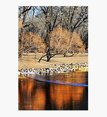 Willow Reflection Photographic Print
