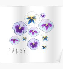 Pansy illustration Poster
