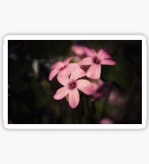 Pink oxalis flower Sticker
