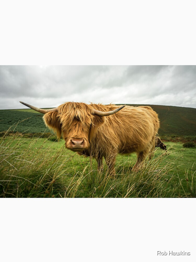Hairy Coo  by hawkie