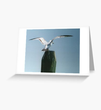 Perching Seagull Greeting Card