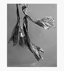 Dried Blooms Photographic Print