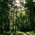 Lärchen Wald by emilys