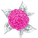 Camellia inked sketched art flower by Sarah Trett