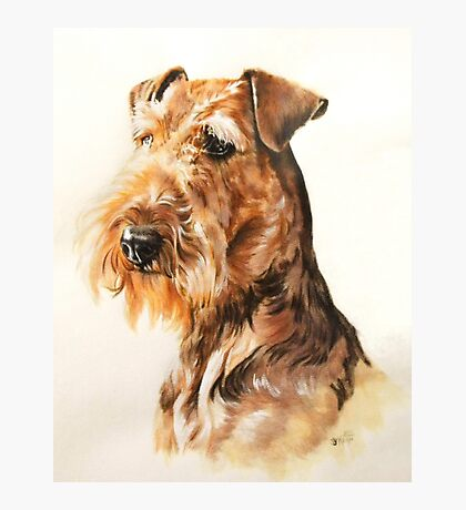Airedale Photographic Print