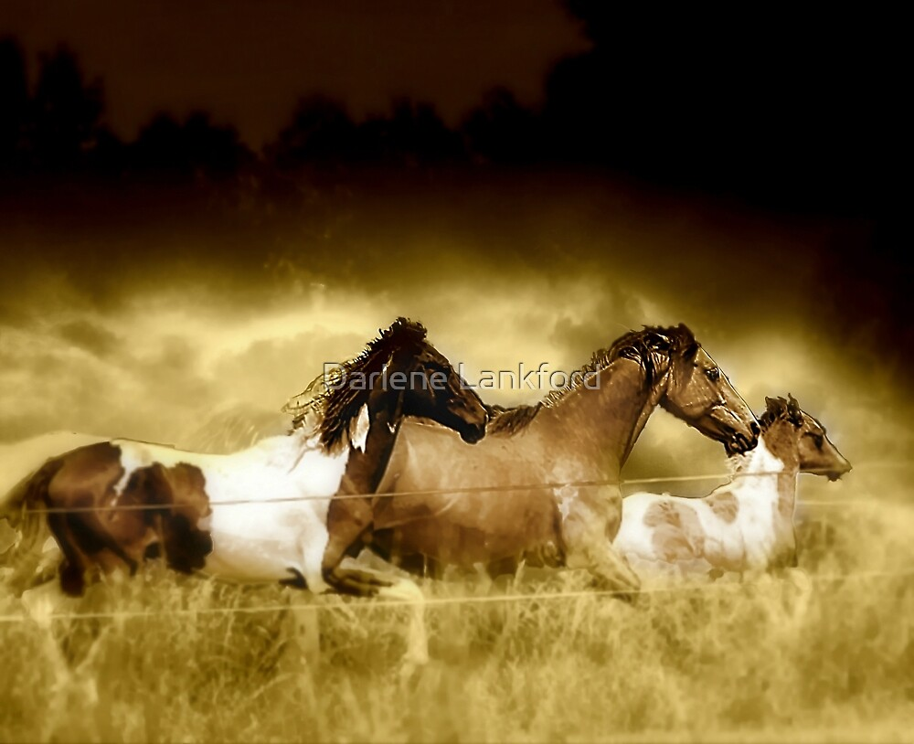 Horses on the Run by Darlene Lankford