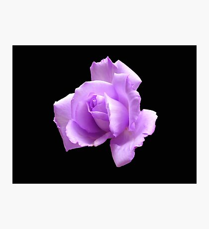 Dreamy Blue Moon Rose - Black Background Photographic Print