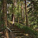 Walk through the Rainforest at the Australian National Botanic Garden in Canberra by Wolf Sverak