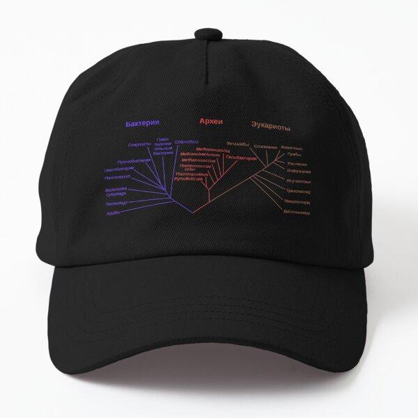 Филогенетическое древо, построенное на основании анализа рРНК, показывает разделение бактерий, архей и эукариот Dad Hat