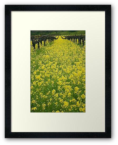 Spring in the Vinyard by Barbara  Brown