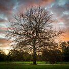 Tree, Banksia Park, Heidelberg by prbimages