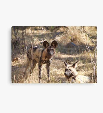 Two African wild dogs in Moremi Game Reserve, Botswana Canvas Print