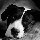 Black and White Pup by Danielle Espin