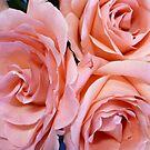 Wedding Roses by Jess Meacham