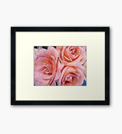 Wedding Roses Framed Print