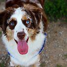 Happy Dog by Jenni Heller