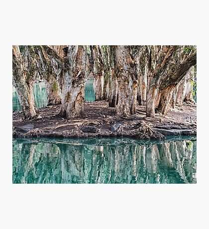 Billabong Reflections Photographic Print