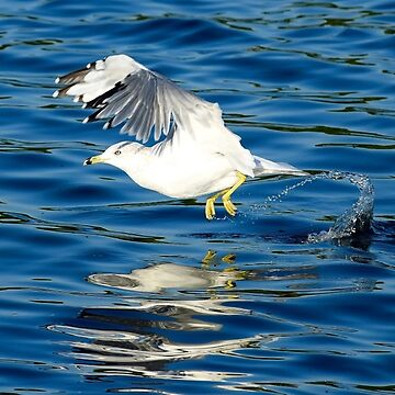 Seagulls's Takeoff by Colette22